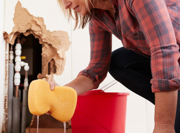 What To Look For In A Carpet Drying Service